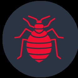 Bed Bug Control Wynnum