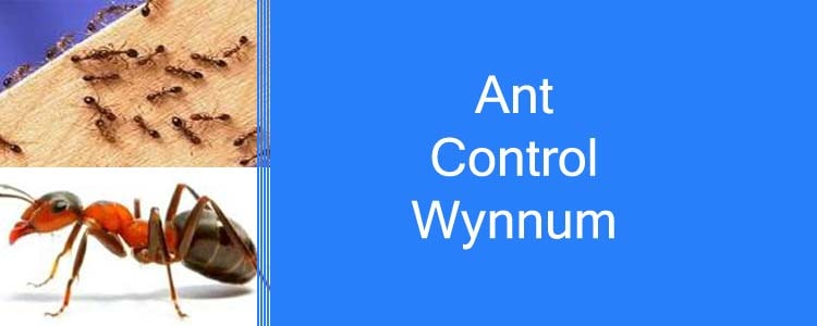 Ant Control Wynnum