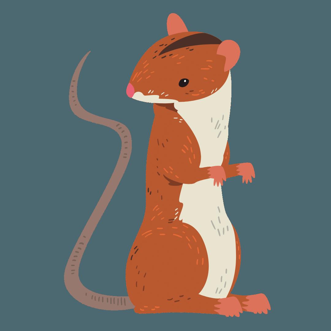Rodent Control Wynnum