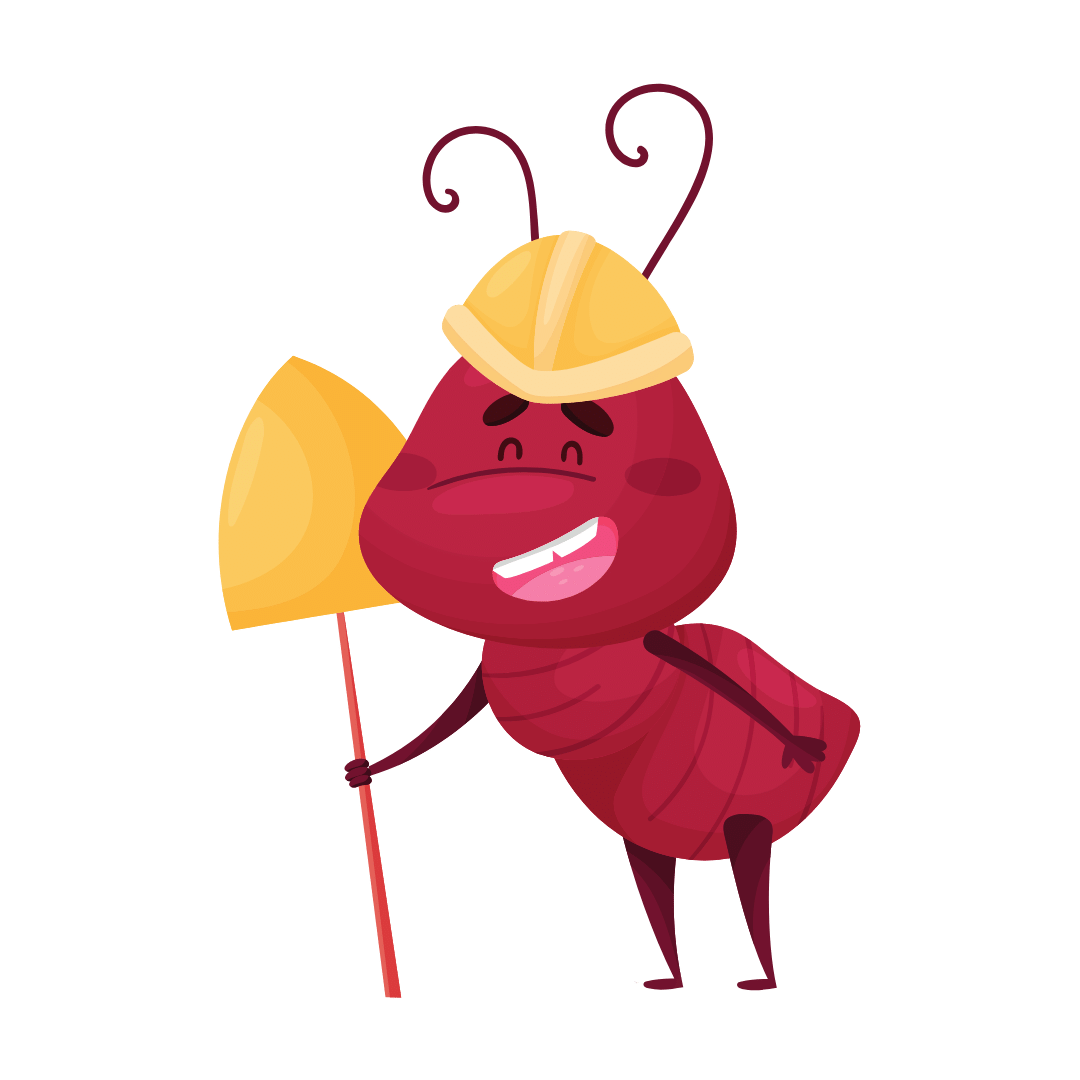 Termite Control Wynnum